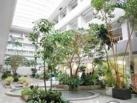 本社オフィスは鹿島建設の建築設計本部と同じビル。緑と水のある開放的なオフィス空間で働けます。