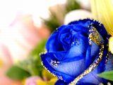 """http://iishuusyoku.com/image/誕生日や記念日などのプレゼントで人気の""""ブリザードフラワー""""の製作にも、同社の染料が使われているんです!(脱色工程で特許取得)"""