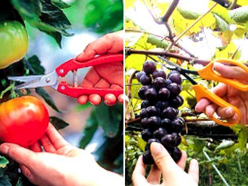アジア・ヨーロッパを中心に約60ヶ国に輸出!海外でもプロ仕様のブランドとして知られており、ワイン生産地をはじめ、世界各地の果樹農家や園芸業者の間で高い評価を得ています!