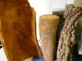 これが、コルクの原料!コルクガシの樹皮からワインの栓になるコルク製品が作られます!