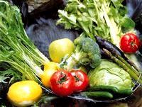 """扱う商品は、人の生きる営み=食の根本を支える青果物。大手青果卸業として同社の果たす役割は非常に大きなものがあります。人の営みの源、国の生命である""""食""""を共に支えていきましょう。"""