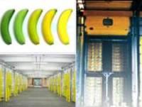http://iishuusyoku.com/image/バナナは、専用の室で黄色く色付けされます!それを「追熟(ついじゅく)」加工といいます!