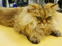 社内で仕事中!専務のベリーちゃん。かわいいネコちゃんとワンちゃんが、疲れを癒してくれます!