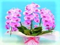 https://iishuusyoku.com/image/胡蝶蘭、ユリ、菊、カーネーションなど様々な花材を、スーパーマーケット、通販会社、冠婚葬祭業向けに卸しています。