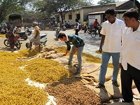http://iishuusyoku.com/image/カレーに欠かすことのできないターメリックをはじめとした香辛料を大手食品メーカーに卸しています。