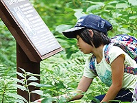 <樹名板のトップブランド!> あなたも一緒に、自然の魅力を多くの人々に伝えるお手伝いをしていきませんか?