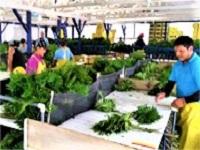 https://iishuusyoku.com/image/ホームセンター店頭にある園芸用品コーナーで販売されている切り花や苗木を海外から輸入して卸しています。