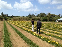 http://iishuusyoku.com/image/百合など様々な球根をオランダやチリ、ニュージーランドから輸入し、国内の農園へ届けています!