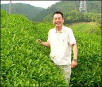 https://iishuusyoku.com/image/茶を栽培する農園。農園は契約先だけでなく、自社でも保有しています。※写っているのは社長。